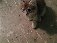 Кемерово: Малыш ищет дом! Котенок-подкидыш жалобно плачет в подъезде. Мальчик, дымчатый с красивыми пятнами, около 2х месяцев. Чистый, красивый, пушистый, бежит