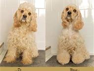 Кемерово: Стрижка собак Стрижка собак с выездом на дом. Стандартные и гигиенические стрижки, тримминг, стрижка когтей, мойка сушка, удаление колтунов. С любовью