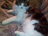 Пропал кот Потерялся котик 6 января, 7 месяцев, очень домашний, пугливый, Новороссийск - Потерянные